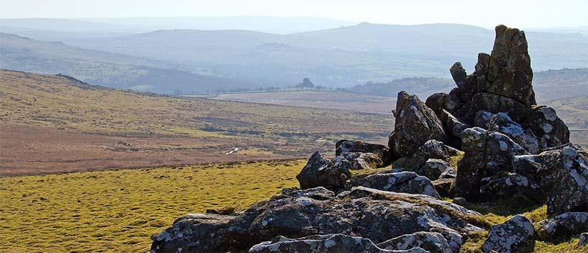 Cox Tor Dartmoor Dog Walk